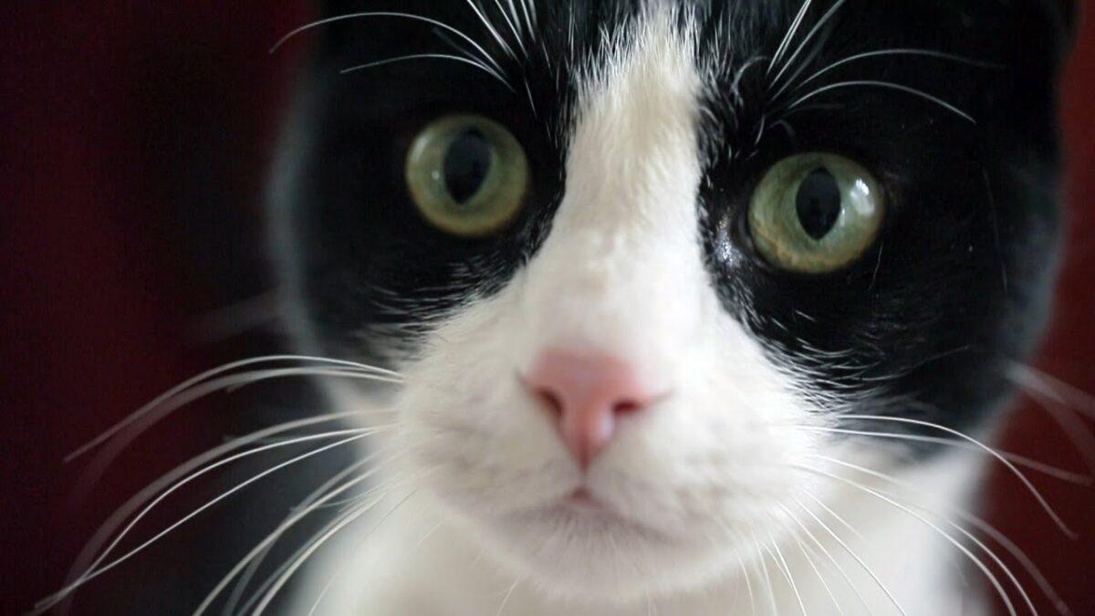 Oproep!: stop met het gebruik van lijmplankjes voor dieren.